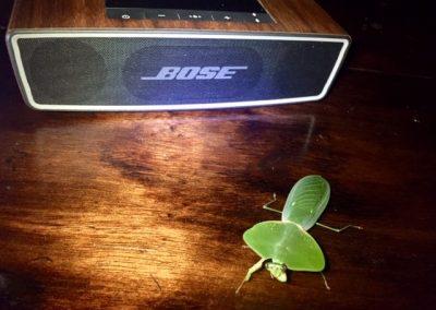 Bose Käfer