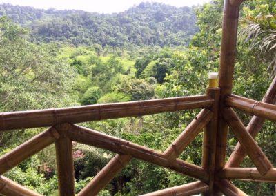 Vista bosque