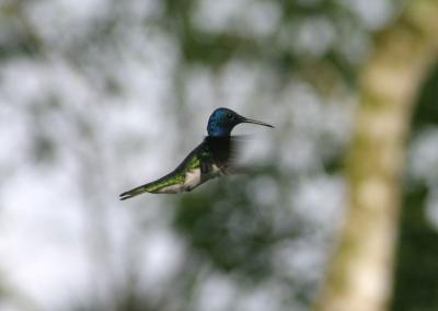 colibri4