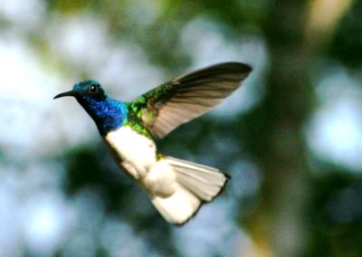 colibri6
